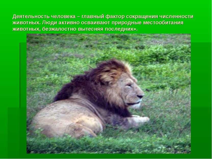 Деятельность человека – главный фактор сокращения численности животных. Люди ...