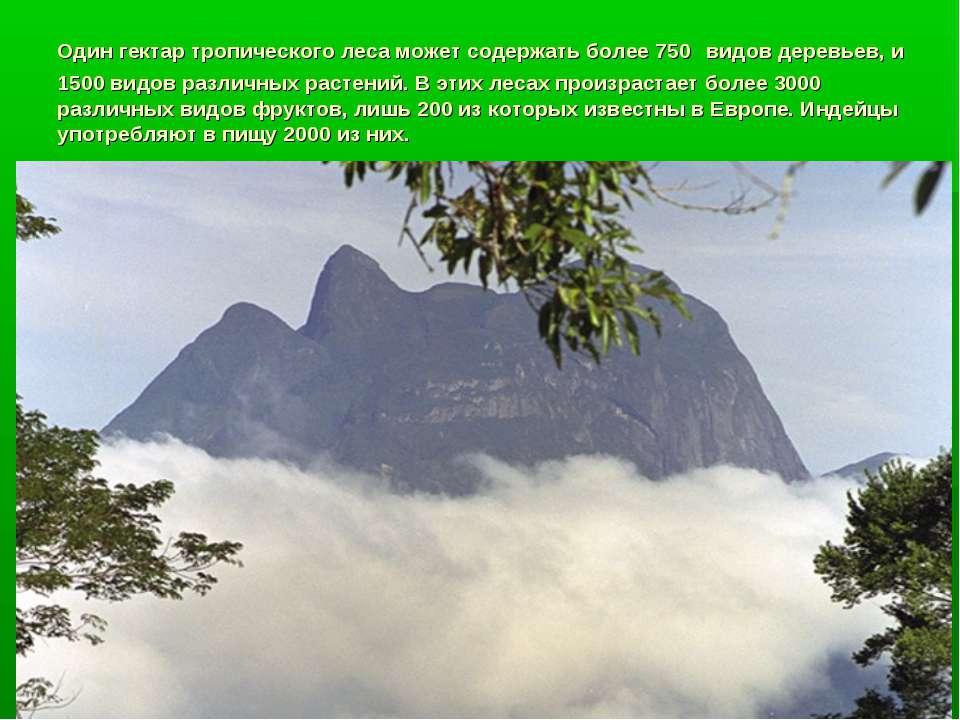 Один гектар тропического леса может содержать более 750 видов деревьев, и 150...