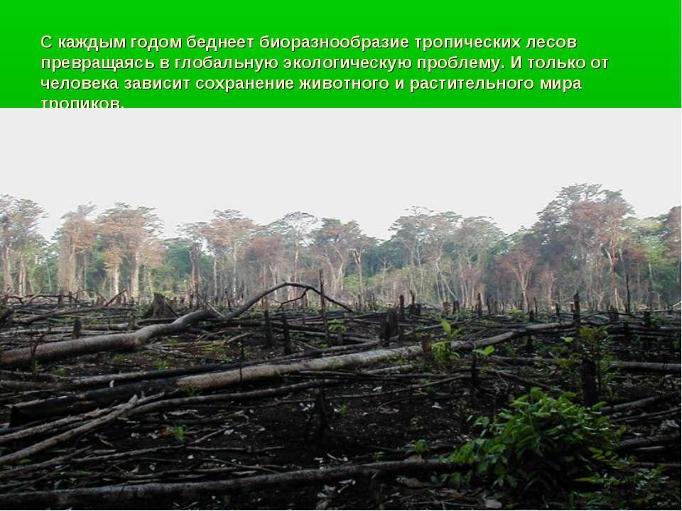 С каждым годом беднеет биоразнообразие тропических лесов превращаясь в глобал...
