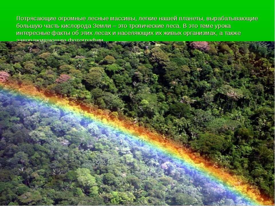 Потрясающие огромные лесные массивы, легкие нашей планеты, вырабатывающие бол...