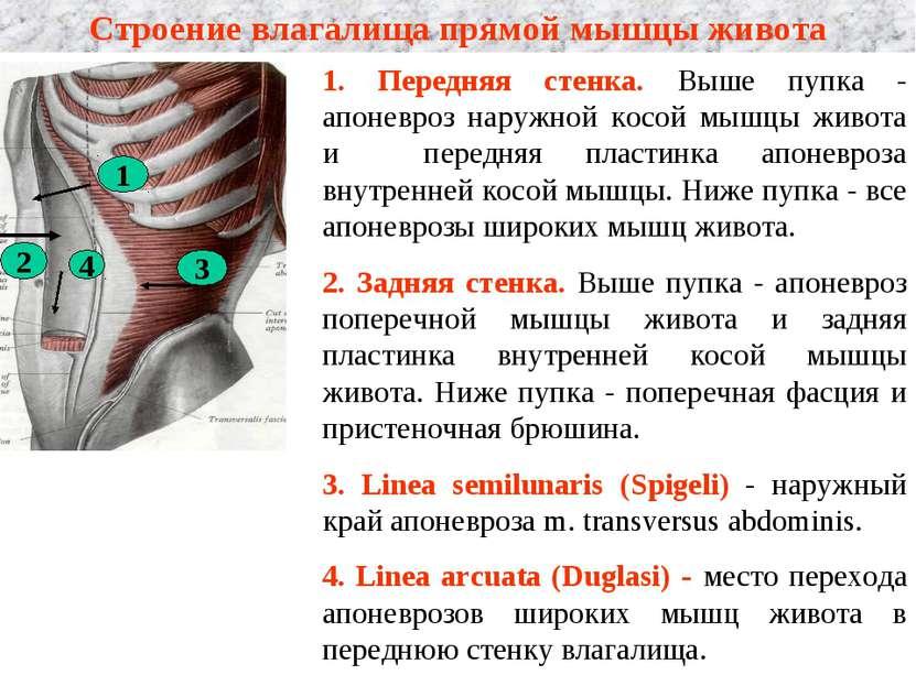 napryazhenie-v-mishtsah-vlagalisha