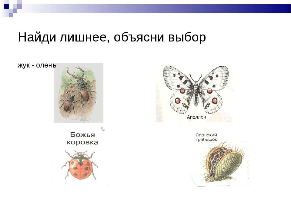 Найди лишнее, объясни выбор жук - олень