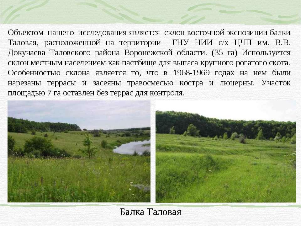 Объектом нашего исследования является склон восточной экспозиции балки Талова...
