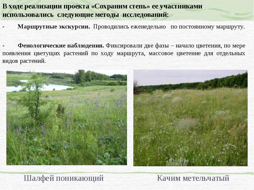 В ходе реализации проекта «Сохраним степь» ее участниками использовались след...