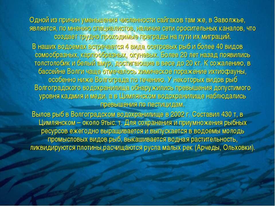 Одной из причин уменьшения численности сайгаков там же, в Заволжье, является,...