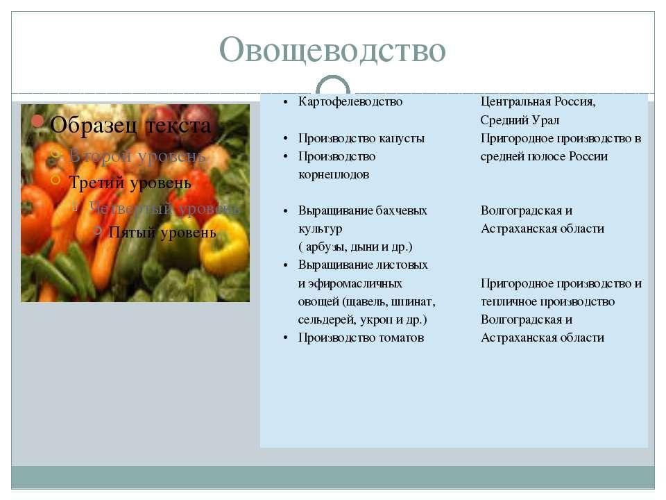 Овощеводство Картофелеводство Производство капусты Производствокорнеплодов Вы...