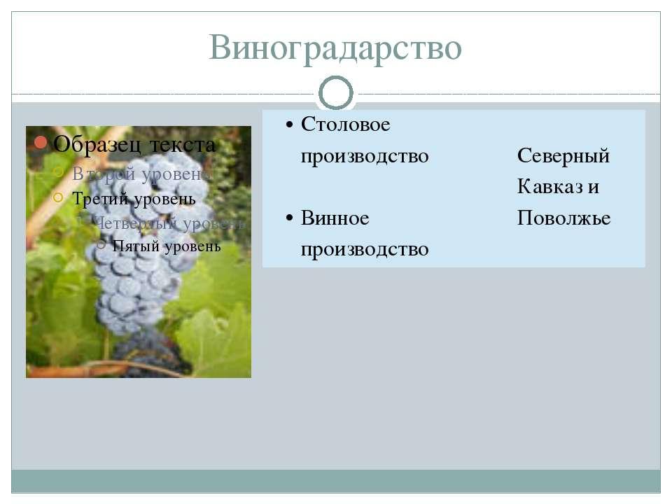 Виноградарство Столовое производство Винноепроизводство СеверныйКавказ и Пово...