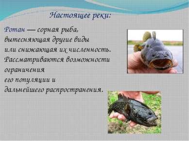 Настоящее реки: Ротан— сорная рыба, вытесняющая другие виды или снижающая их...