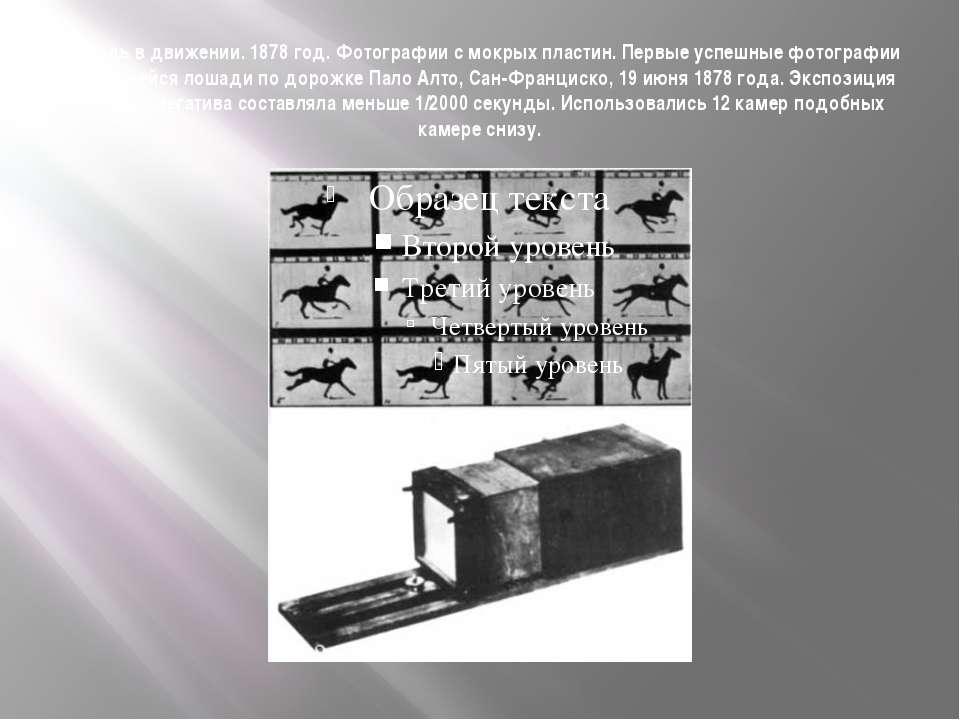 Лошадь в движении. 1878 год. Фотографии с мокрых пластин. Первые успешные фот...