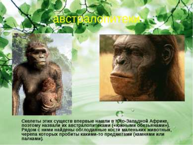 австралопитеки Скелеты этих существ впервые нашли в Юго-Западной Африке, поэт...