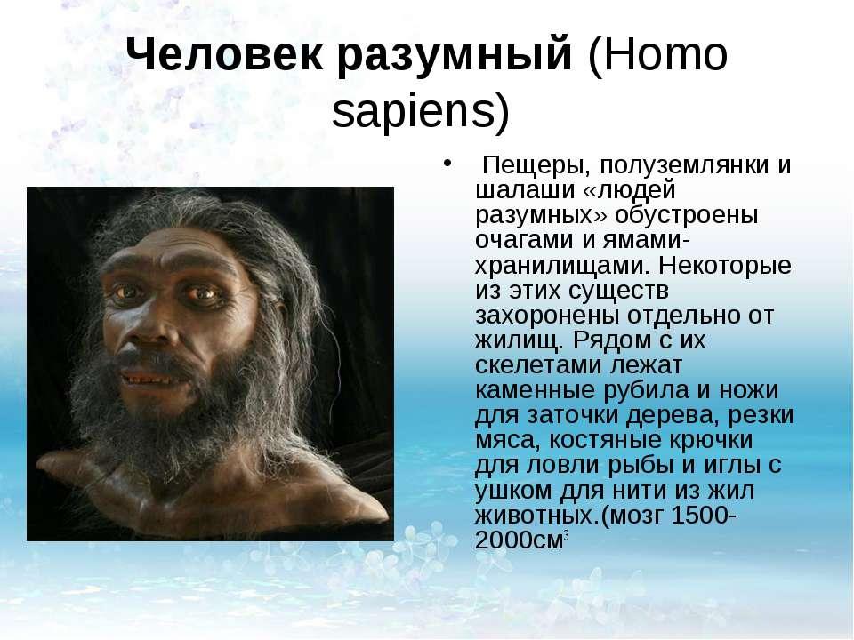 Человек разумный (Homo sapiens) Пещеры, полуземлянки и шалаши «людей разумных...