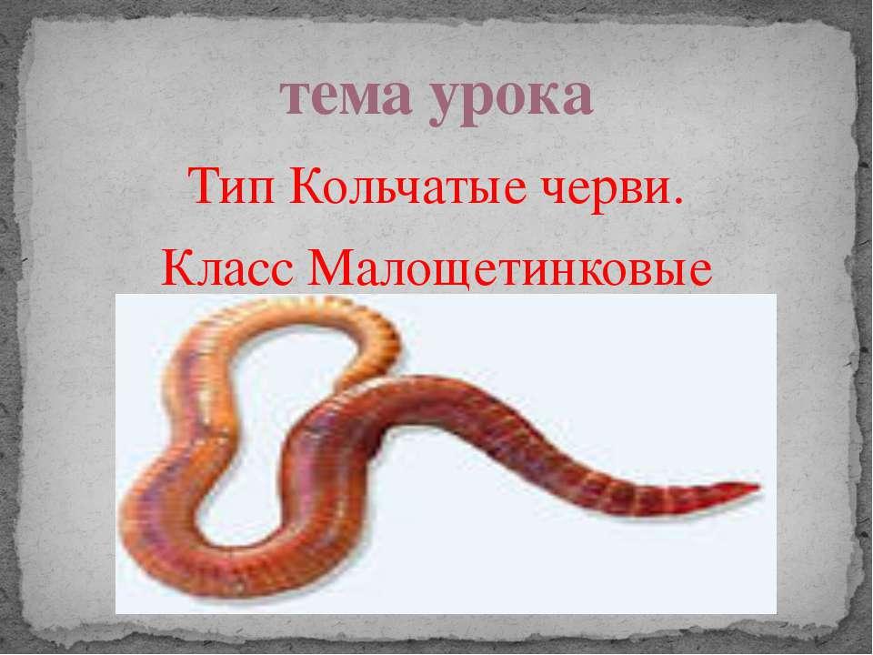 Тип Кольчатые черви. Класс Малощетинковые тема урока
