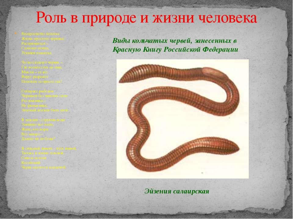 Беспросветно нелегка Жизнь простого червяка: Распрямиться – Склюнет птица, Уг...