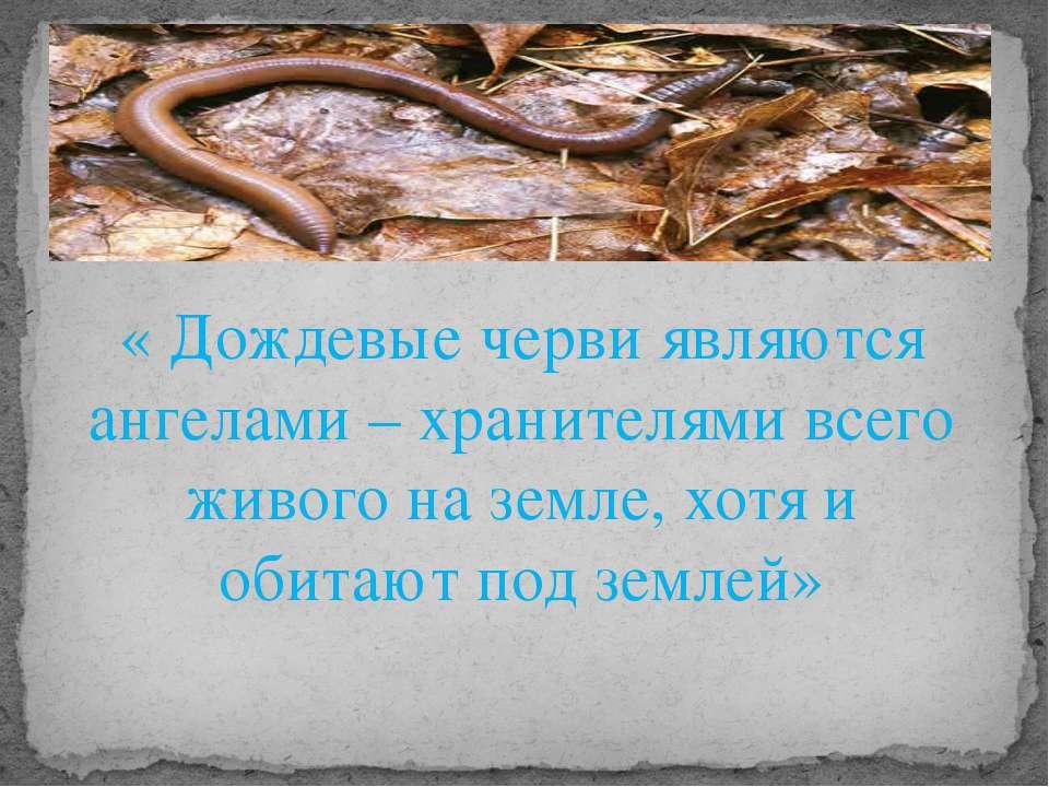 « Дождевые черви являются ангелами – хранителями всего живого на земле, хотя ...