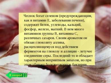 В огород Чеснок богат селеном (предупреждающим, как и витамин Е, заболевания ...