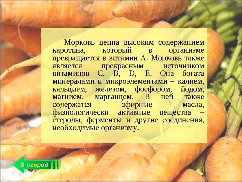В огород Морковь ценна высоким содержанием каротина, который в организме прев...