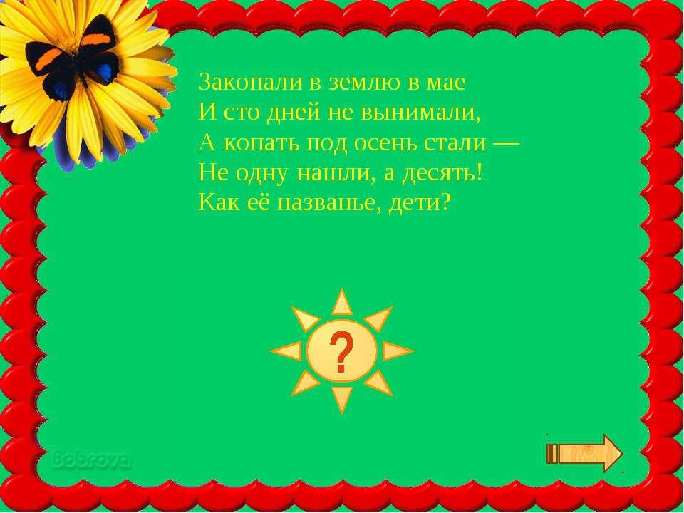 Закопали в землю в мае И сто дней не вынимали, А копать под осень стали — Не ...