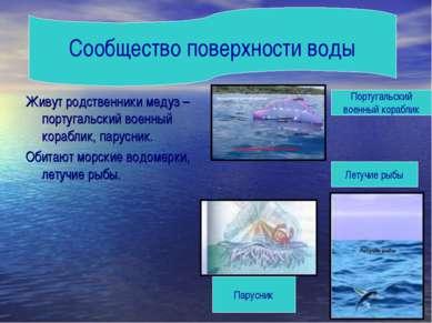 Живут родственники медуз –португальский военный кораблик, парусник. Обитают м...
