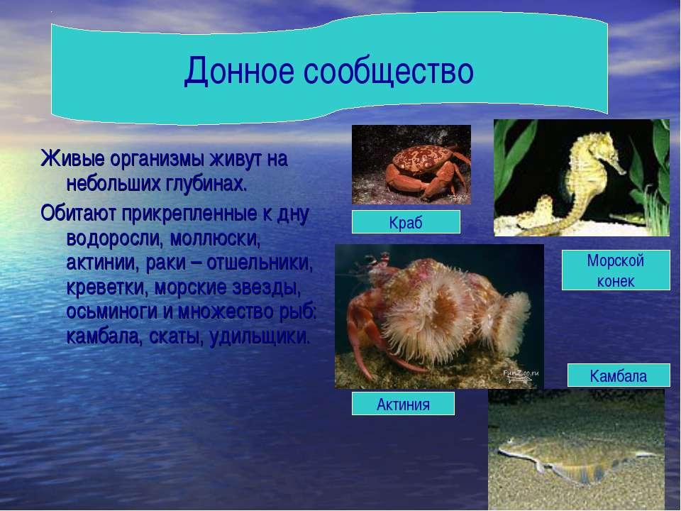 Живые организмы живут на небольших глубинах. Обитают прикрепленные к дну водо...