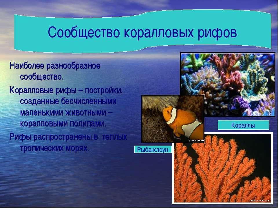Наиболее разнообразное сообщество. Коралловые рифы – постройки, созданные бес...