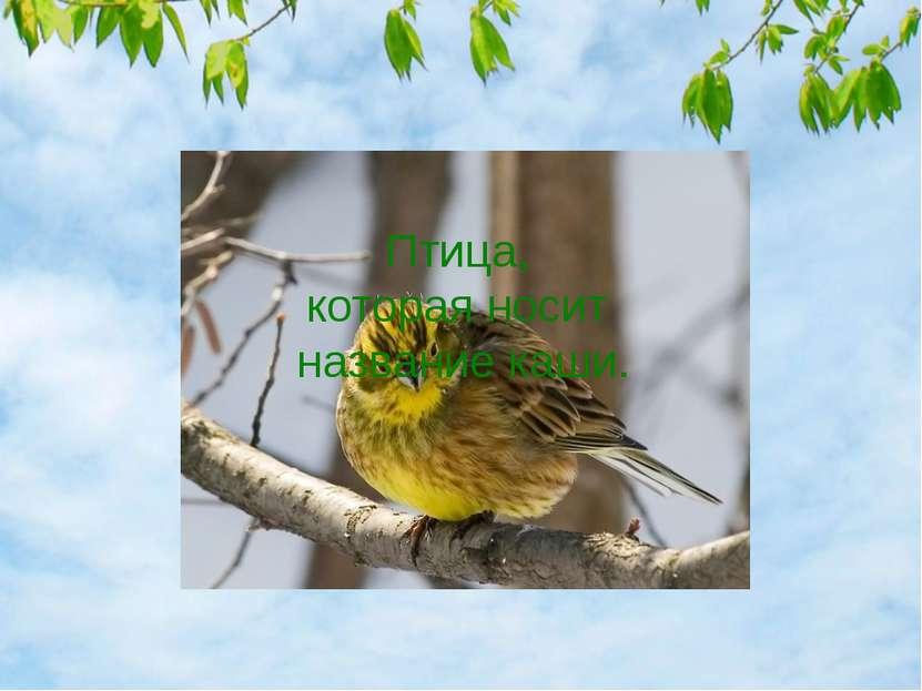 Птица, которая носит название каши.
