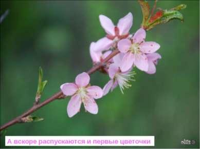 А вскоре распускаются и первые цветочки