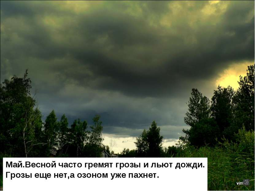 Май.Весной часто гремят грозы и льют дожди. Грозы еще нет,а озоном уже пахнет.