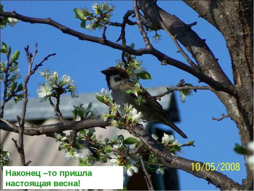 Наконец –то пришла настоящая весна!