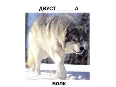 ДВУСТ _ _ _ _ А  (охотничье ружьё) волк