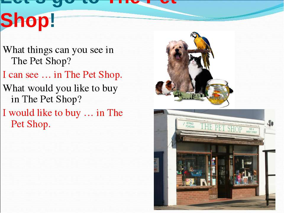 * Let's go to The Pet Shop! What things can you see in The Pet Shop? I can se...