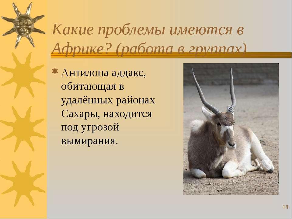 * Какие проблемы имеются в Африке? (работа в группах) Антилопа аддакс, обитаю...