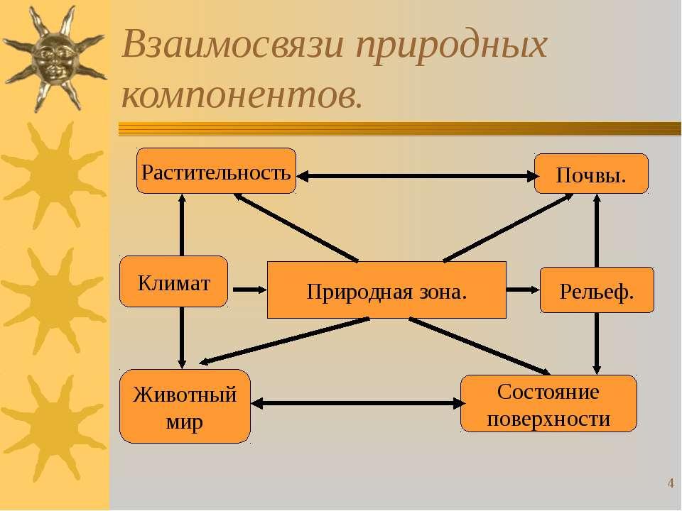 * Взаимосвязи природных компонентов. Природная зона. Почвы. Рельеф. Состояние...