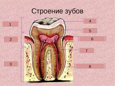 Строение зубов Коронка Шейка Корень Зубная пульпа Дентин Эмаль 2 3 1 4 5 6 Це...