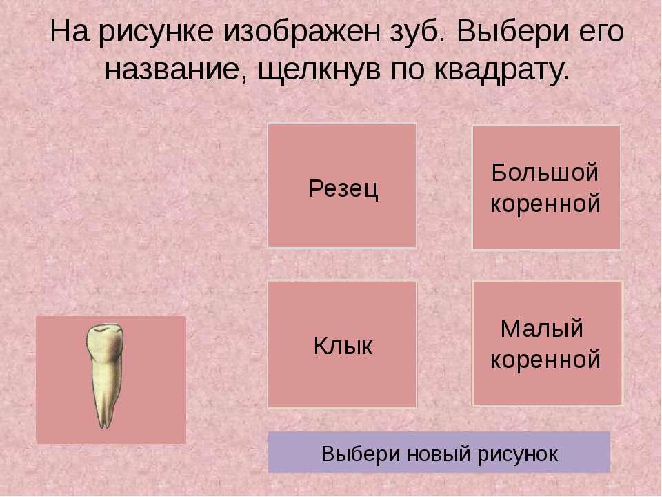 На рисунке изображен зуб. Выбери его название, щелкнув по квадрату. Выбери но...