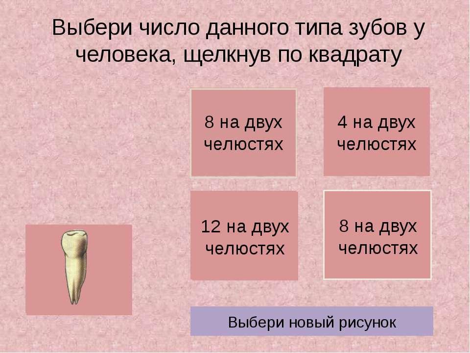Выбери число данного типа зубов у человека, щелкнув по квадрату Выбери новый ...