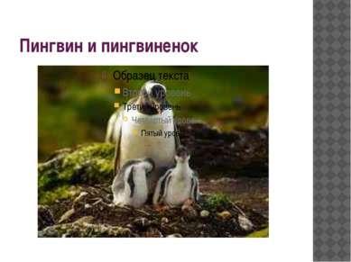 Пингвин и пингвиненок