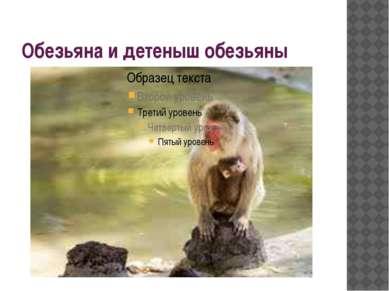 Обезьяна и детеныш обезьяны