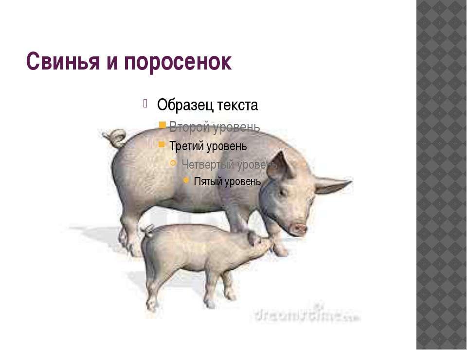 Свинья и поросенок