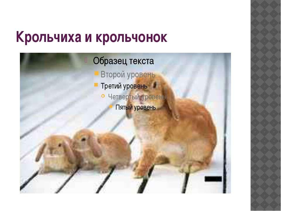Крольчиха и крольчонок