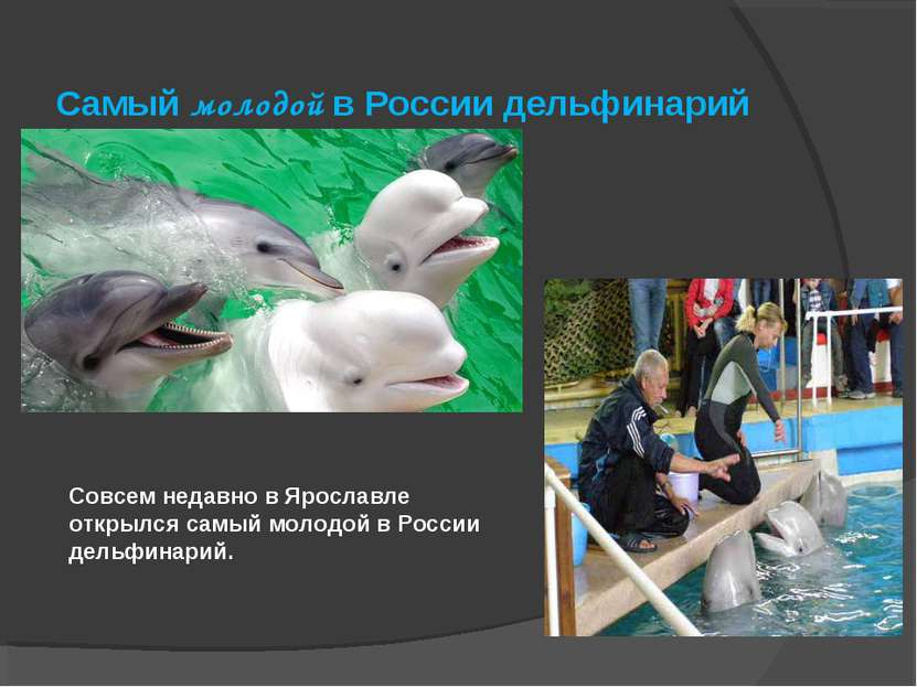 Совсем недавно в Ярославле открылся самый молодой в России дельфинарий. Самый...