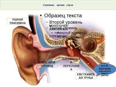 Строение органа слуха Тема. Строение и функции слухового анализатора. Гигиена...