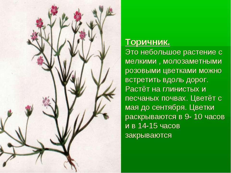 Торичник. Это небольшое растение с мелкими , молозаметными розовыми цветками ...