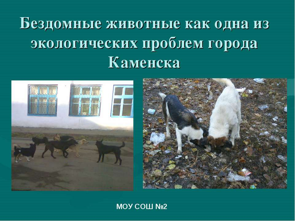 Бездомные животные как одна из экологических проблем города Каменска МОУ СОШ №2