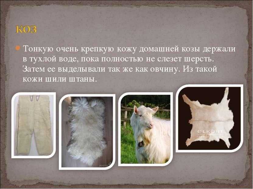 Тонкую очень крепкую кожу домашней козы держали в тухлой воде, пока полностью...