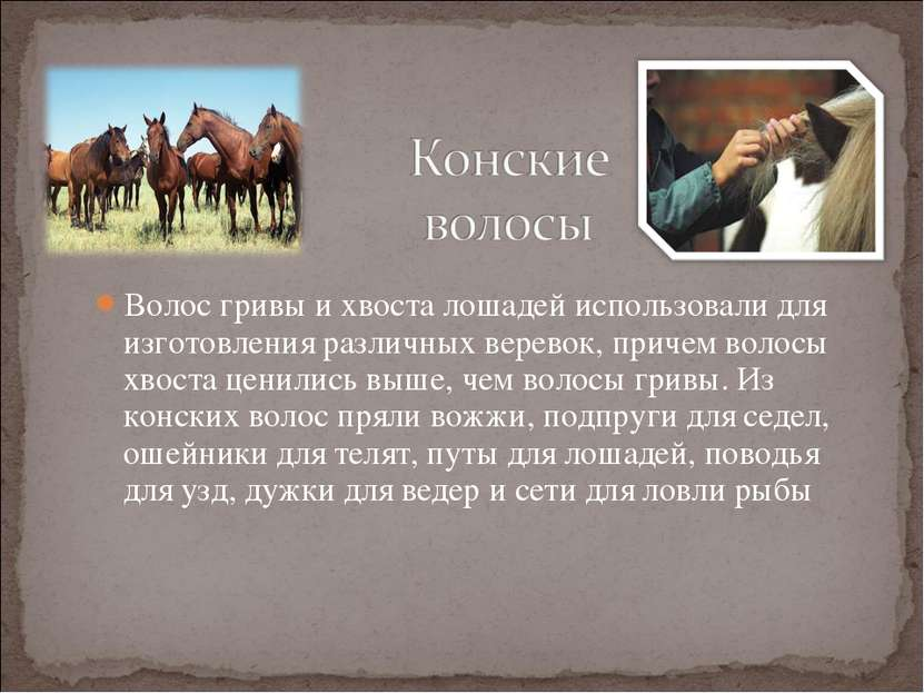 Волос гривы и хвоста лошадей использовали для изготовления различных веревок,...
