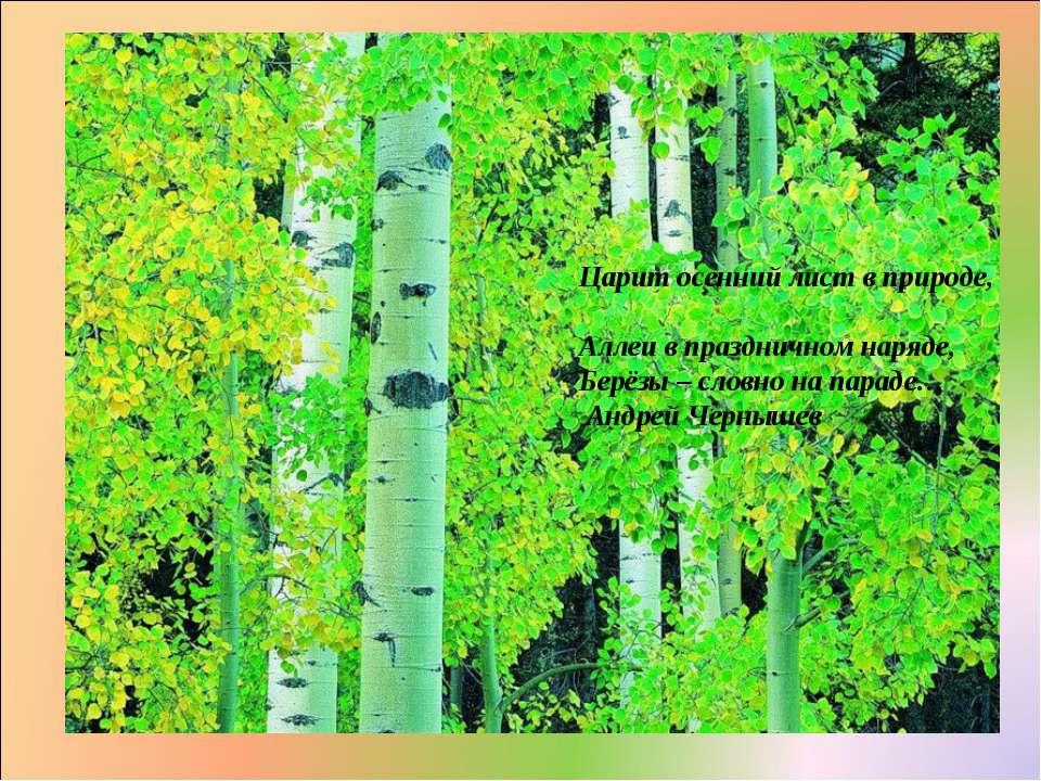Царит осенний лист в природе, Аллеи в праздничном наряде, Берёзы – словно на ...