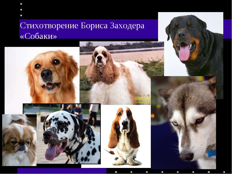Стихотворение Бориса Заходера «Собаки»