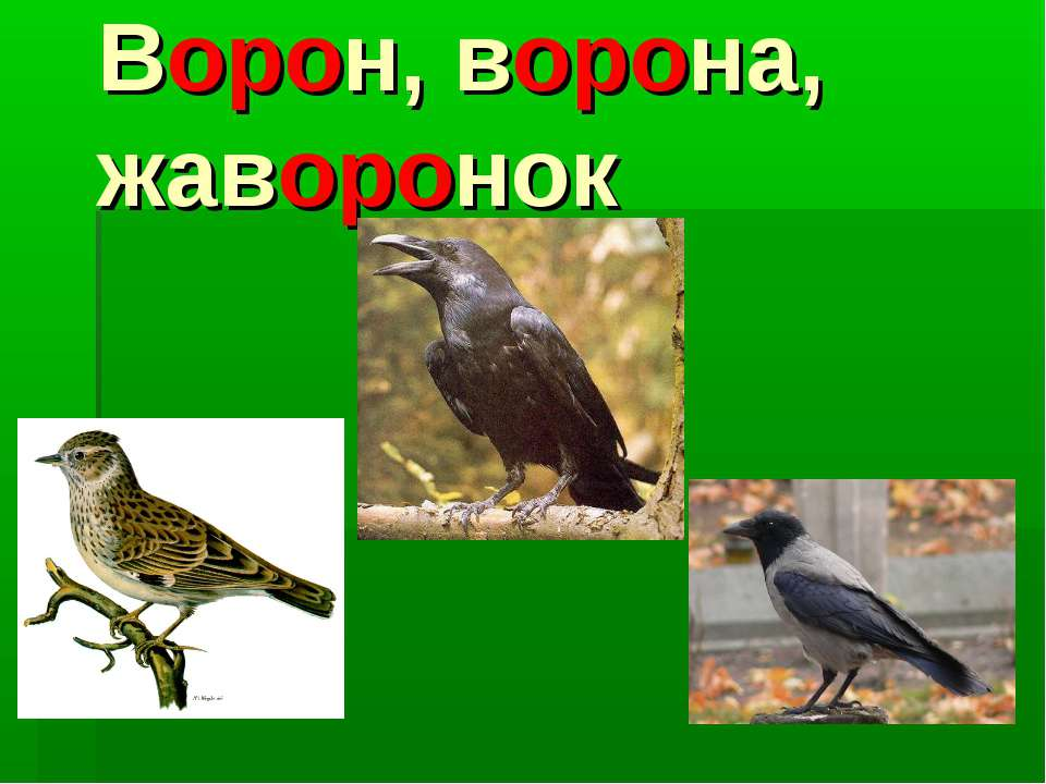 Ворон, ворона, жаворонок
