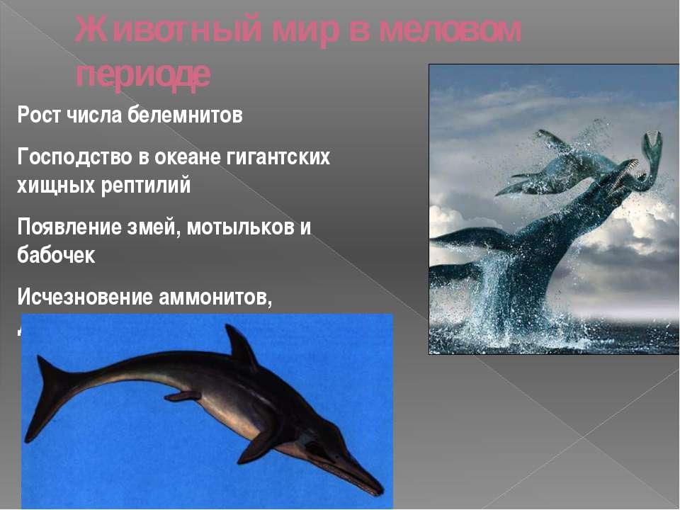 Животный мир в меловом периоде Рост числа белемнитов Господство в океане гига...