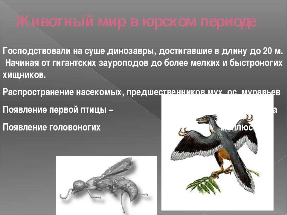Животный мир в юрском периоде Господствовали на суше динозавры, достигавшие в...